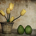 Tulips And Green Pears by Levin Rodriguez