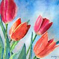 Tulips by Arline Wagner
