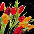 Tulips Colors by Khalid Saeed