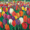 Tulips Everywhere by Sally Seago