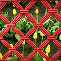 Tulips In Jail by Jean Noren