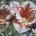 Tulips In Springtime Photomosaic by Michelle Calkins