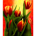 Tulips Jgibney Signature  5-2-2010 Greenville Sc The Museum Zazzle For Faa20c by jGibney The MUSEUM Zazzle Gifts