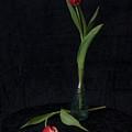 Tulips  by Jouko Lehto