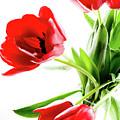 Tulips by Kathryn Goddard