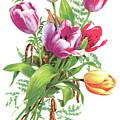 Tulips by Neil Baylis