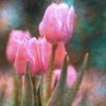Tulips by Peter Olsen