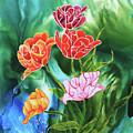 Tulips by Sherry Shipley