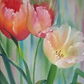 Tulips by Sherry Winkler