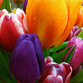 Tulips Smiling by Marie Hicks