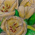 Tulips Trio by Joan-Violet Stretch