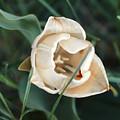 Tulipsandbluebells by Shawna Moore