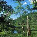 Tully River Summer by John Burk