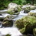 Tumbling Creek by Jim Love