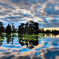 Tumultuous Swamp by Kimo Fernandez