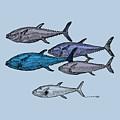 Tuna School Of Fish by Karl Addison