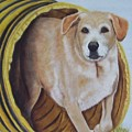 Tunnel Dog by Janice M Booth