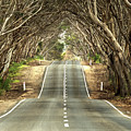 Tunnel Of Trees by Catherine Reading