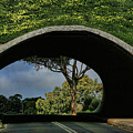 Tunnel Vision by Douglas Barnard