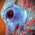 Turkey Head Shot by Kim Pate