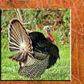 Turkey Strut by Geraldine Scull