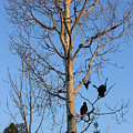 Turkey Vulture Tree by Two Bridges North