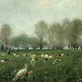 Turkeys In The Countryside At Sunset by Alceste Campriani