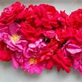 Turning Up Roses by Karen Henninger