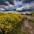 Turnip Field by Bonnie Bruno