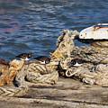 Turnstones At The Harbour by Susie Peek