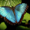 Turquoise Beauty by Sabrina L Ryan