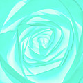 Turquoise Rose by Heather Joyce Morrill