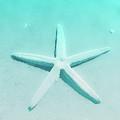Turquoise Starfish 1 by Heather Joyce Morrill
