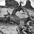 Turret Arch - Bw by Lynn Kim