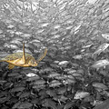Turtle And Fish School by Dave Fleetham - Printscapes