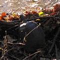 Turtle At Deer Creek by Ginger Repke