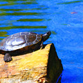 Turtle Basking In The Sun by Wingsdomain Art and Photography