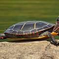 Turtle  by Beth Sibik