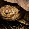 Turtle Closeup by Sue Harper