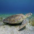 Turtle Cove by Rob Lantz