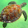 Turtle Day In Titusville,florida by Davids Digits