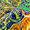 Turtle Eye by Anthony C Chen