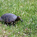 Turtle In The Grass by George Jones