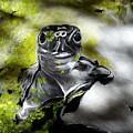 Turtle by Judit Szalanczi