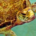 Turtle Life by Lisa Renee Ludlum