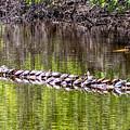 Turtle Log by Richard Chasin