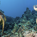 Turtle Panorama by Dave Fleetham - Printscapes