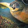Turtle Run by Karen Zuk Rosenblatt