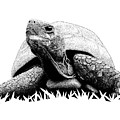 Turtle by Scott Woyak