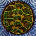 Turtle Shell Mandala Sparkle by Lori Russell